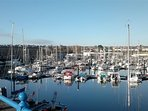 Milford Haven marina and town houses beyond