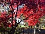 Fall in Boston; Nov 2016