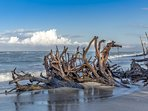 Stump Pass State Park is a tropical paradise just a few minutes down the road,
