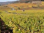 Meursault vines showing their autumn colours
