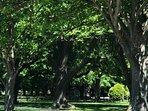 Hagley Park A nice shady spot for a picnic