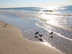 Natures activity in front of Reef Club at Indian Rocks Beach - waves, sound and birds.