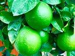Fragrant Fruit Trees!