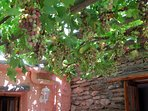 The vine covered patio keeps the bedrooms cool and they are refreshing to eat!