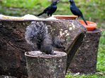 Birds and squirrels share the feeders