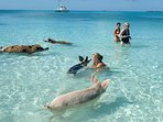 A must swim with the pigs in Exuma!