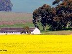 Local Durbanville farm