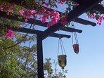 Abundant bougainvillea shading the alfresco dining area