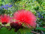 Colorful tropical plants bloom year round.