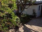 Studio +  Garden