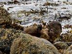 Otter Loch Sunart