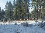 Resident heard of Elk