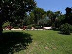 Viale d'ingresso alla villa e particolari delle piante del giardino