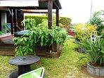 Jacuzzi et plantes tropicales
