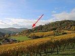Entre vignoble et Vosges, une situation idéale pour ces villas modernes.