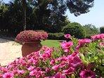 Particolari delle piante fiorite nel giardino