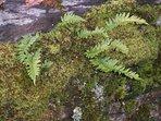Snowdonia has areas of precious temperate rainforest eco systems.