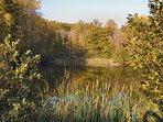 Ponds and wildlife everywhere