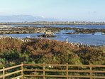 Splendid views of the rugged Connemara coastline from the property