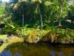 View from queen bedroom lanai. The private pond is geothermally heated.
