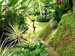 Huge Garden space