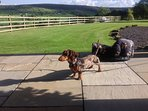 Percy loved his holiday in The North York Moors National Park:-)