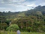 Rio que corta floresta araucária.
