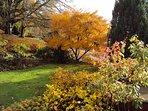 Nutkin Cottage garden in Autumn