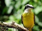 A birdwatcher's paradise!
