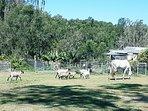 Castilla Del Amor - Cottage on Farm