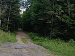 Variety of trails (woods, roads, etc)