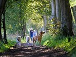 Woodland walks surround us at Glenarm Castle and Carnfunnock Country Park.