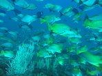 The area is known for having abundant fish, this is just off of Isla Ladrones, 1 hour from Mango Bay