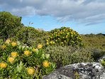 Hectares of pristine indigenous fynbos surround the house as it borders the Kogelberg Nature Reserve