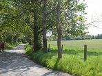 Wayside Walk