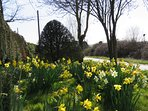 The Daffodils at Firdove are  nearly out this is the 2016 display