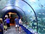 Visit the Aquarium - there's also, entertainment for ' Children ' zoo, amusement parks