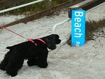 Sanibel is a pet friendly beach and we often allow small dogs with approval