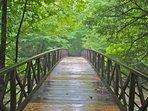 Explore the National Park in Gatlinburg