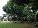 Our beautiful big green garden