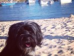 Izzy our Tibetan terrier enjoying her holiday (dogs allowed on town beaches October - Easter only)