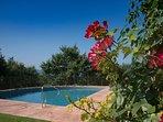 Villa Mandorlo's swimming pool