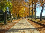 The Walls of Lucca in Autumn