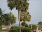 Enjoy the ocean views and Palmetto Trees from the Condo's Screened In Porch