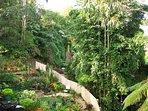 Creek and veggie gardens