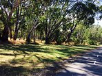 Campaspe walking track into town.