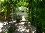 Vine arbour by pool offers shade from the midday sun