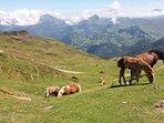 free roaming livestock