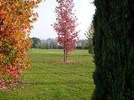 The garden in Autumn