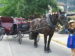 carriage rides in town